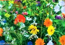 graines Fleurs été sauvage wild flower