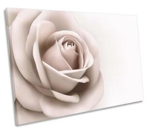 Cream Rose Flower Floral CANVAS WALL ART DECO LARGE READY TO HANG all sizes