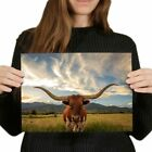 A4 - Texas Longhorn Cow American Poster 29.7X21cm280gsm #14569