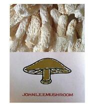 Bamboo mushroom dried 300 grams