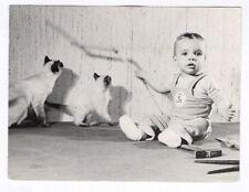 PHOTO ANCIENNE Snapshot Cat Chat Bébé assis Jeu Chaton Lumière Ombre Animal 1970