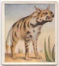 Striped Hyena Hyaena c80 Y/O Trade Ad Card