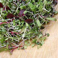 Microgreens Seeds- Sprouting Seeds- Heirloom Varieties-  4,900+ Seeds