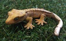 Kaiyodo Capsule Q Crested gecko Lizard PVC mini pvc figurine figure C