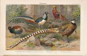 1897 PHEASANTS, Poultry,Antique Chromolithograph Print