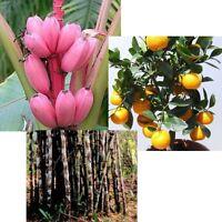 Drei tolle EXOTISCHE PFLANZEN für drinnen: Rosa Banane, Orangenbaum und Bambus