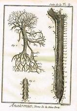 "Diderot's ""Enclyclopedie"" - TRONC DE LA VEINE PORTE - c1750"
