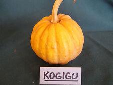 Pumpkin KOGIGU-Pumpkin Seeds-JAPANESE GEM-16 SEEDS.