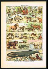 1922 Mammals, Lion, Whale, Polar Bear, Tiger, Monkeys, Antique Print - Larousse