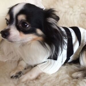 SMALL BLACK AND WHITE PET SMART STRIPED JUMPER Sale !! £6.99 Now £4.99