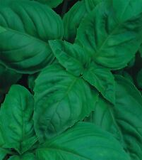 More details for organic herb - basil - classic italian - 300 seeds - economy