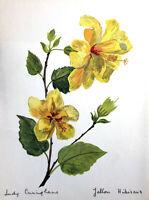 TROPICAL CHINESE YELLOW HIBISCUS BUSH ~ Floral Botanical Flower Decor Art Print