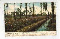 1906 Mexico City DF Mexico Postcard Cover to Texas USA Poppies Floating gardens
