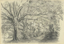 Adeline Frances Mary Dart, Wooded Estate Path – 1866 graphite drawing