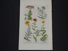 Sir John Hill, Botanical, The Vegetable System 1761-1775 Elf-Wort #02