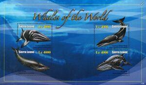 Whales of the World (Minke/Sei/Blue Whale) Stamp Sheet (2010 Sierra Leone)