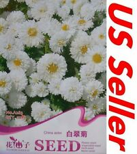 50 Seeds White China Aster Seeds G115, Home Gardening Seeds