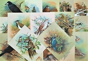 20 BIRD PRINTS. JOB LOT OF VARIOUS BIRDS. 1960s PRINTS OF PAINTINGS BY BASIL EDE