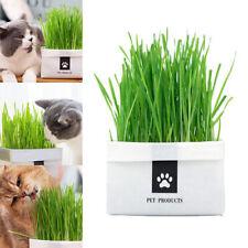 Pet Organic Kit Seeds Snacks Cat Grass Natural Soilless Culture Hairballs