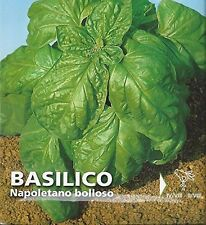 Premier Seeds Direct IPP58 3.1 g Italian Basil Napoletano Bolloso Seeds (Pack