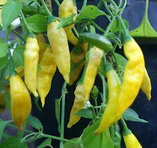 "PEPERONCINO - "" Chili Lemon Drop "" 25 SEMI"