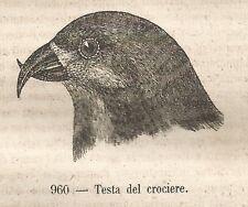 A0588 Testa del Crociere - Stampa Antica del 1858 - Xilografia