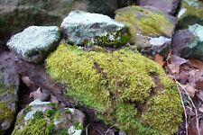 Ozark Mountains Live Moss & Lichen Covered Rocks