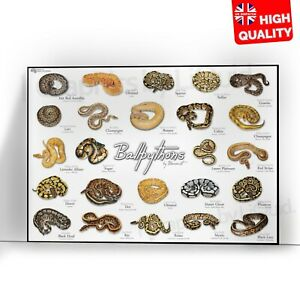 Types Of Ball Pythons Animal Educational Poster Print | A5 A4 A3 |