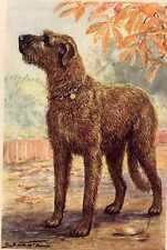 Irish Wolfhound - MATTED Dog Art Print - German / NEW U
