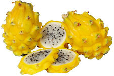 Yellow Dragon Fruit–Pitaya - truly one of god's wonders! 10 Finest Seeds