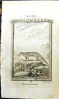 Antique Old Print Middle Ant Eater Bell Buffon Natural History Animal 1791 18th