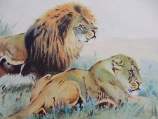 ART WATERCOLOUR  A Anglado  1910 LION & LIONESS  from STONE Family ARCHIVE