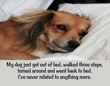 METAL FRIDGE MAGNET Dog Out Bed Three Steps Back To Bed I Relate Humor Funny