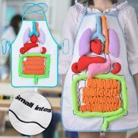 Anatomy apron human body organs awareness educational insights children toy gMFS