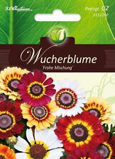 5352290 Wucherblume Frohe Mischung Chrysanthum   Blumen Samen Mix