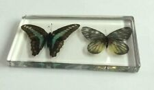 $ 25    Vintage Insect Specimen PO-10  Design  Paperweight