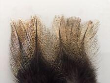 12 PLUMES PARDO RINON flor de escoba claro grade 1