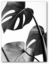 Monstera Leaf Print, Tropical Leaf, Black And White Art, 8 x 10 inches, Unframed