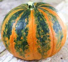 Seeds Pumpkin Vitamin Vegetable Organic Heirloom Russian Ukraine
