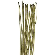 Dried Natural Equisetum Horsetail Bundle