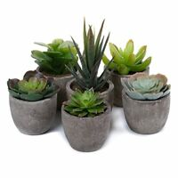 Artificial Succulent Plants Series Plastic Decorative Grass Collection 1 of T4U,