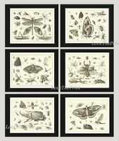 Unframed Botanical Print Set 6 Antique Butterflies Black and White Home Wall Art