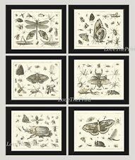 Unframed Botanical Print Set 6 Antique Butterflies Black and White Home Wall Art