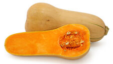 Waltham Butternut squash 50 seeds * Heirloom * Non GMO *  CombSH G12