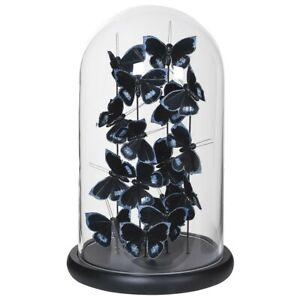 Butterfly Glass Cloche Display Dome Black & Silver Butterflies Objects Du Art Cu
