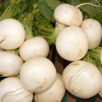 Turnip, White Egg Fresh Hand-Packaged Heirloom Seeds Non GMO
