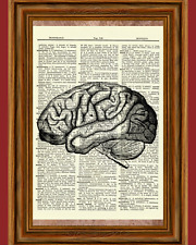 Brain Human Anatomy Dictionary Art Print Poster Picture Skull Skeleton Science