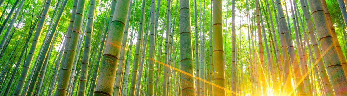 bamboo-lifestyle