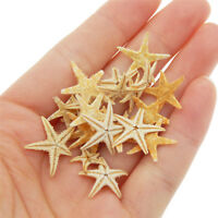 20x Dried Real Starfish Seashells Ornament Craft Beach Decor Wedding Decorations
