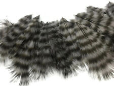 1 Dozen - Grey Dun Grizzly Rooster Chickabou Whiting Farm Superbou Fluff Feather